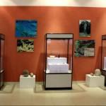 v-pekine-predstavyat-unikalnye-eksponaty-nacionalnogo-muzeya-tadzhikistana_1